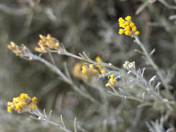 Dolin Plantes